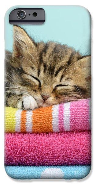 Greg Cuddiford Digital iPhone Cases - Sleepy Kitten iPhone Case by Greg Cuddiford