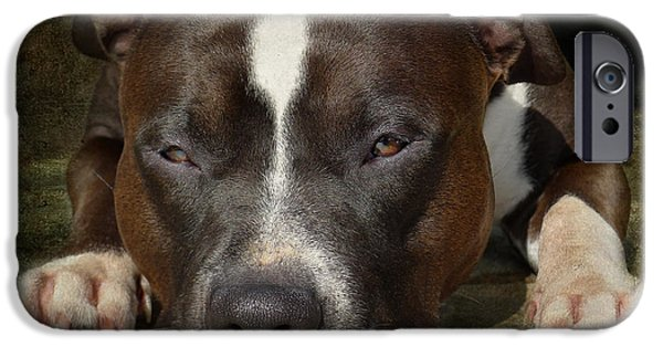 Dog Photography iPhone Cases - Sleepy Pit Bull iPhone Case by Larry Marshall