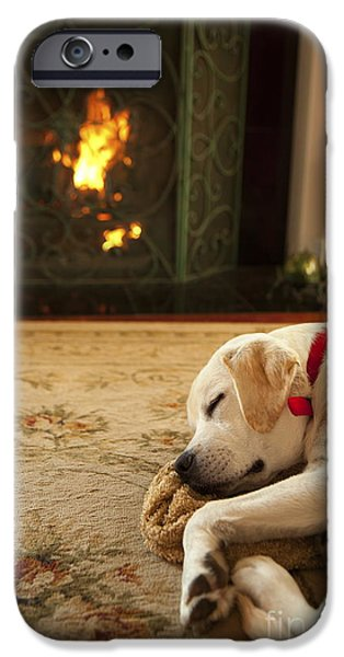 Cute Puppy Photographs iPhone Cases - Sleepy Puppy iPhone Case by Diane Diederich