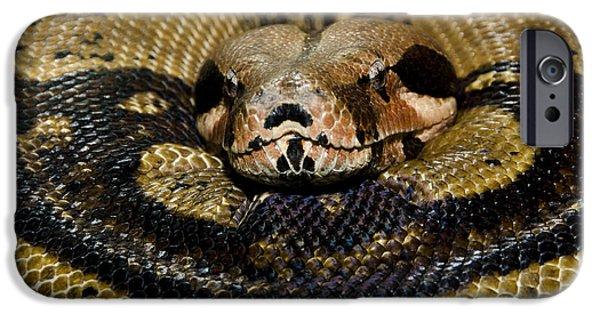 Serpent iPhone Cases - Sleepy Snake iPhone Case by Eleanor  Bortnick