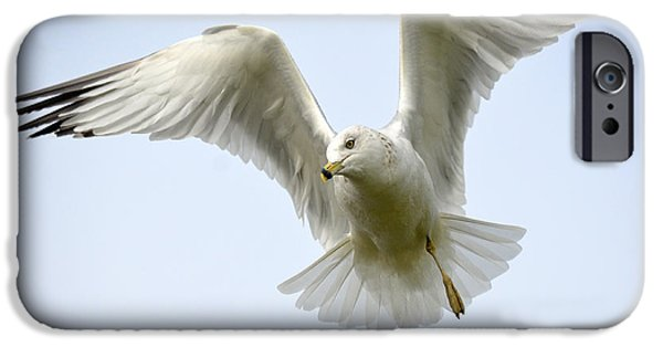 Seagull iPhone Cases - Slight Disadvantage iPhone Case by Fraida Gutovich