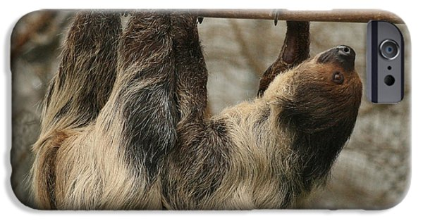 Sloth iPhone Cases - Sloth iPhone Case by Ellen Henneke
