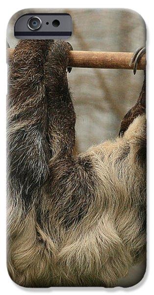 Sloth iPhone Case by Ellen Henneke