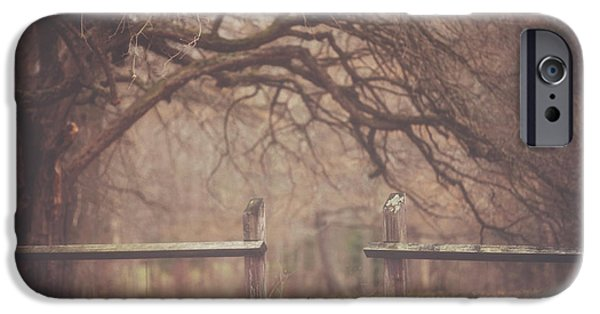Autumn Trees iPhone Cases - Sly Guy iPhone Case by Carrie Ann Grippo-Pike