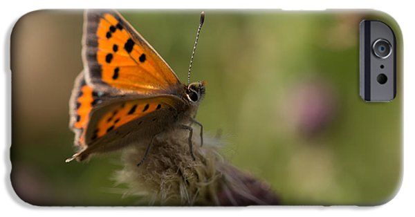 Insect iPhone Cases - Small Copper Butterfly iPhone Case by Robert Carr