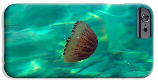 Shape Pyrography iPhone Cases - Small jellyfish in clean water iPhone Case by Oliver Sved