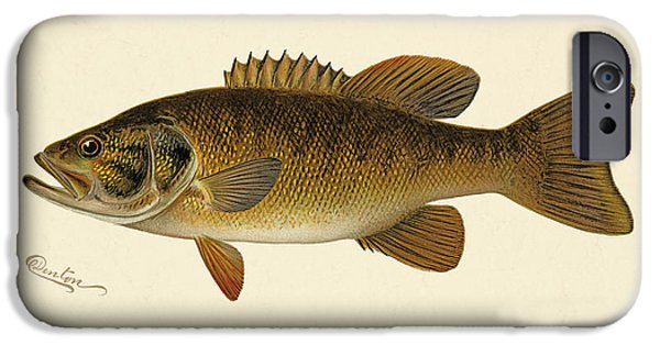 Antiques iPhone Cases - Small Mouthed Black Bass iPhone Case by Gary Grayson