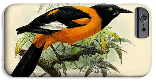 Small iPhone Cases - Small Oriole iPhone Case by J G Keulemans