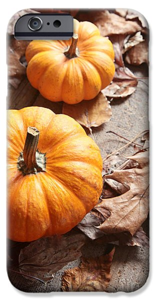 Fall iPhone Cases - Small pumpkins on fall leaves iPhone Case by Sandra Cunningham