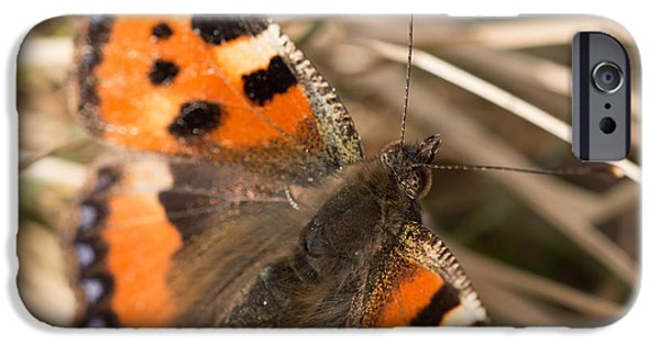 Wildlife iPhone Cases - Small Tortoiseshell Butterfly iPhone Case by Robert Carr