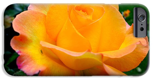 Rose Pyrography iPhone Cases - Smell the rose iPhone Case by Eva Ason