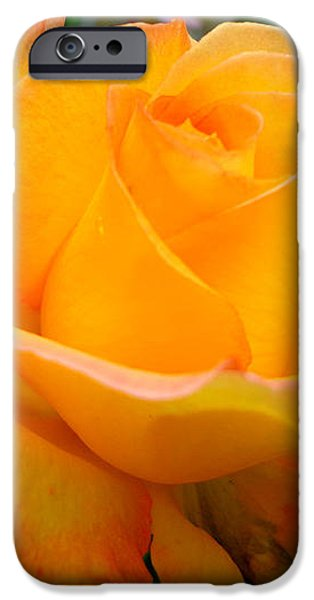 Smell the rose iPhone Case by Eva Ason