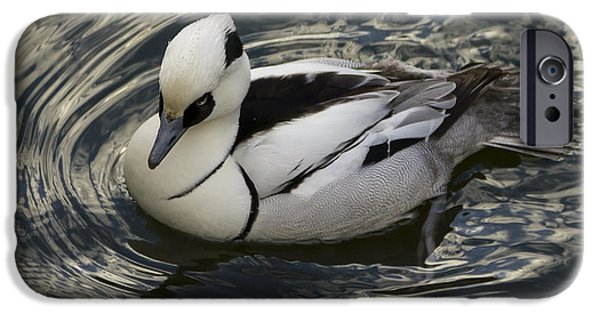 Skewed iPhone Cases - Smew on the water iPhone Case by Anatole Beams
