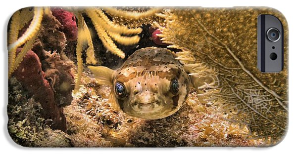 Porcupine Fish iPhone Cases - Smile Your on Camera iPhone Case by Ray Mongeau