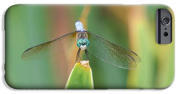 Plant iPhone Cases - Smiling Dragonfly iPhone Case by Karen Silvestri