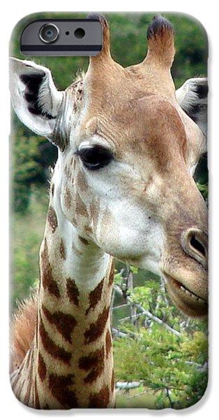 Wildlife Imagery iPhone Cases - Smiling Giraffe iPhone Case by Ramona Johnston
