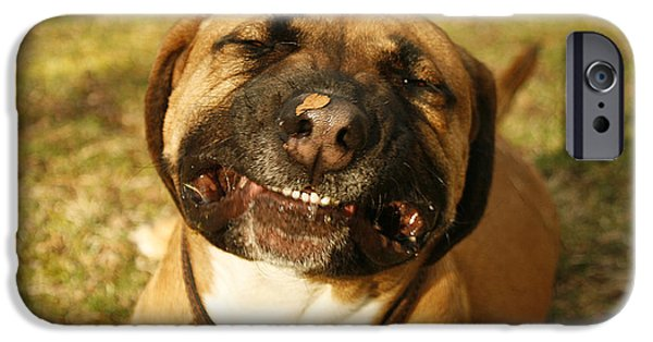 Boxer iPhone Cases - Smiling iPhone Case by Kristia Adams
