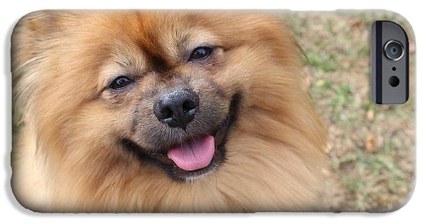 Puppy Iphone Case iPhone Cases - Smiling Pomeranian  iPhone Case by Tegan Jarvis
