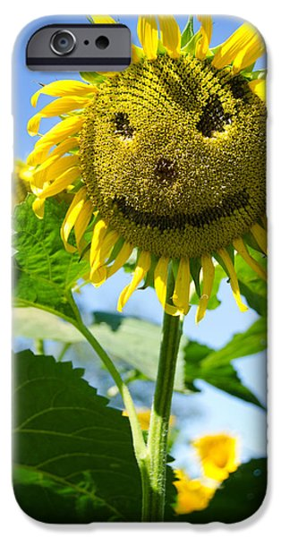 Buttonwood Farm iPhone Cases - Smiling Sunflower iPhone Case by Donna Doherty