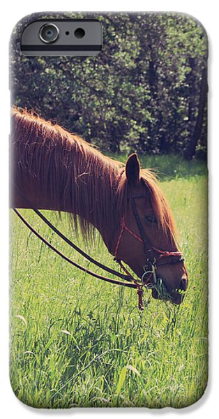 Reining iPhone Cases - Snack Time iPhone Case by Laurie Search