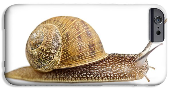 Helix iPhone Cases - Snail iPhone Case by Elena Elisseeva