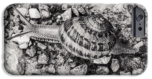 Nature iPhone Cases - Snail in BW iPhone Case by Gloria Pasko