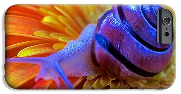 Etc. Photographs iPhone Cases - Snail Pondering On A Flower iPhone Case by Leslie Crotty