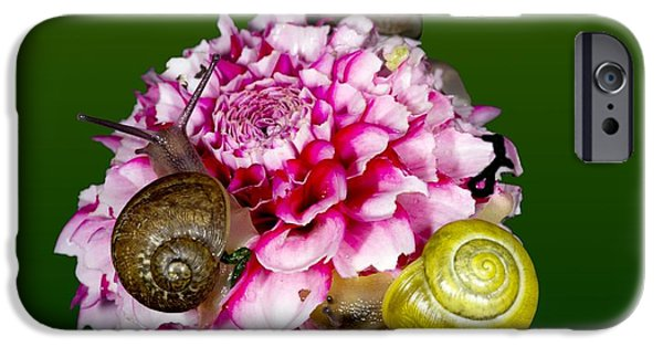 Lips iPhone Cases - Snails Feeding On Flower iPhone Case by Dr. Keith Wheeler
