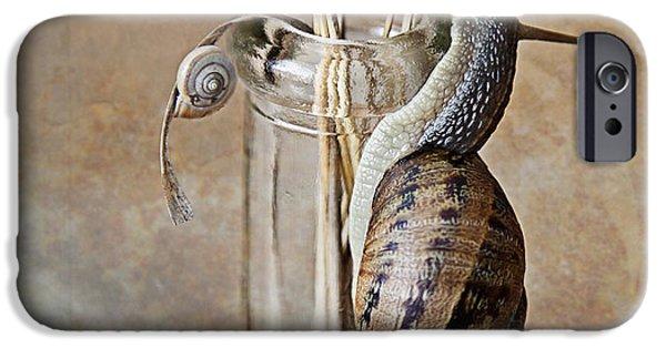 Invertebrates iPhone Cases - Snails iPhone Case by Nailia Schwarz