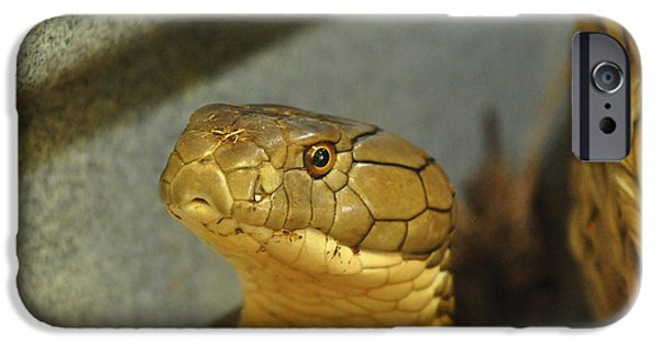 Serpent iPhone Cases - Snake looking at you iPhone Case by Betsy Aguirre