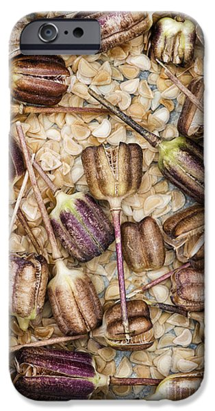 Capsule iPhone Cases - Snakes head fritillary Flower Seeds Pattern iPhone Case by Tim Gainey
