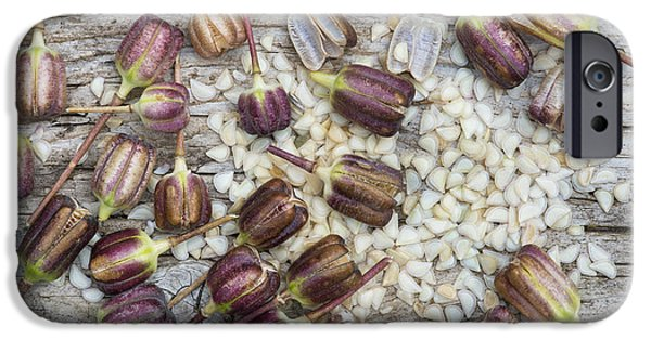 Meleagris iPhone Cases - Snakes Head Fritillary Seed Pods  iPhone Case by Tim Gainey
