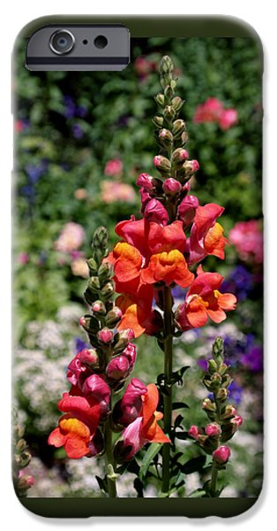 Plant Photographs iPhone Cases - Snapdragons iPhone Case by Rona Black