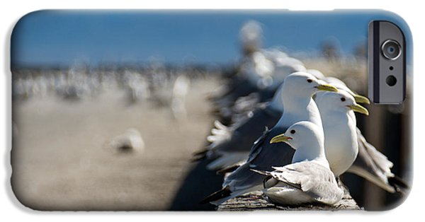 Seagull iPhone Cases - Snazzy Sea Gulls iPhone Case by Debra  Miller