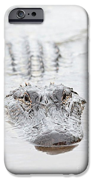 Alligator iPhone Cases - Sneaky Swamp Gator iPhone Case by Carol Groenen