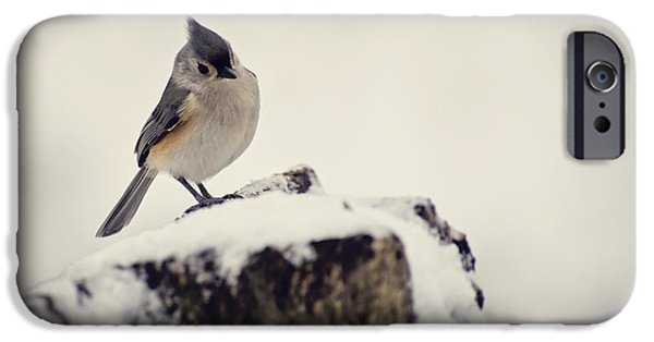 Tufted Titmouse iPhone Cases - Snow Bird iPhone Case by Heather Applegate