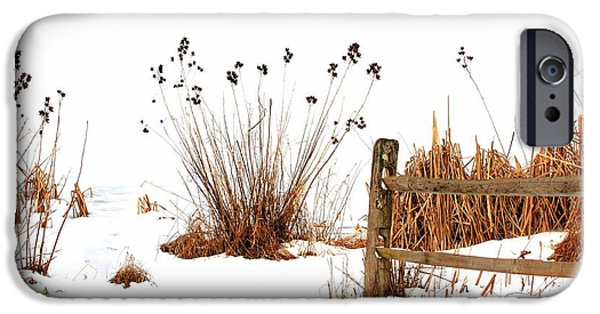 Winter Scene iPhone Cases - Snow Bush iPhone Case by Geraldine Scull