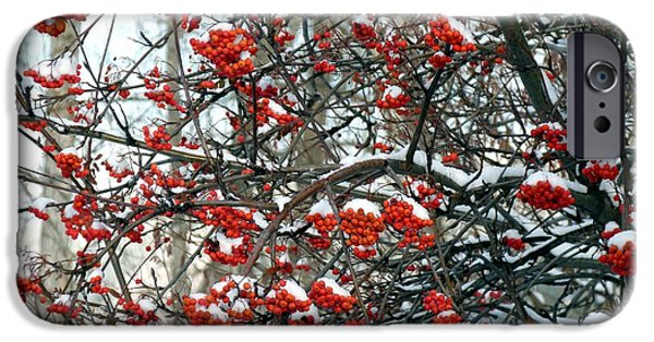 Will Borden iPhone Cases - Snow- Capped Mountain Ash Berries iPhone Case by Will Borden