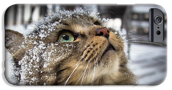 Maine iPhone Cases - Snow Cat iPhone Case by Shane Holsclaw