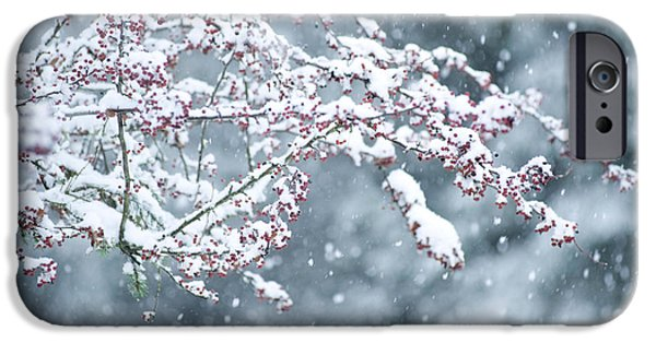 Covering Up iPhone Cases - Snow Covered Branch During Snowing iPhone Case by Panoramic Images