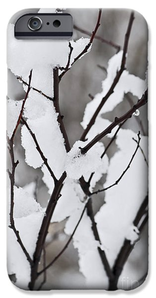 Snowy iPhone Cases - Snow covered branches iPhone Case by Elena Elisseeva