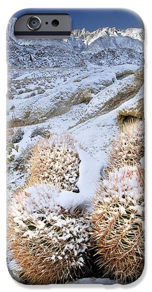 Dave iPhone Cases - Snow Covered Cactus Below Mount Whitney Eastern Sierras iPhone Case by Dave Welling
