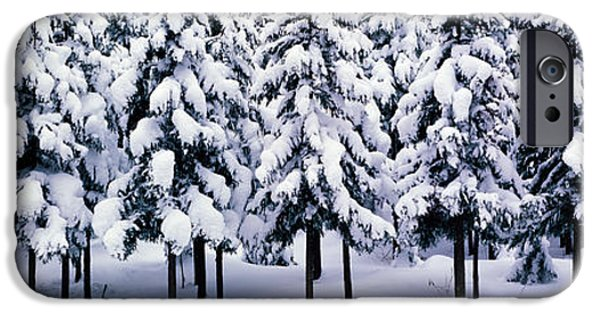 Kyoto iPhone Cases - Snow Covered Cedar Trees Kyoto Hanase iPhone Case by Panoramic Images