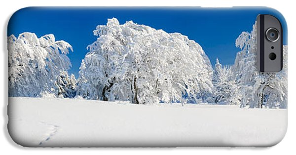Snow Scene iPhone Cases - Snow Covered Common Beech Fagus iPhone Case by Panoramic Images