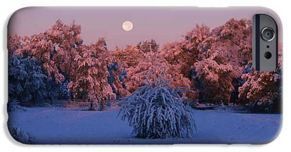 Winter Scene iPhone Cases - Snow Covered Forest At Dawn, Denver iPhone Case by Panoramic Images