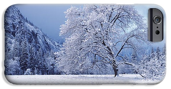 Snow Scene iPhone Cases - Snow Covered Oak Tree In A Valley iPhone Case by Panoramic Images