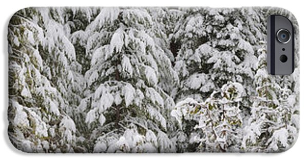 Winter Scene iPhone Cases - Snow Covered Pine Trees, Deschutes iPhone Case by Panoramic Images