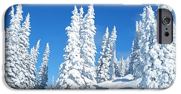 Trees In Snow iPhone Cases - Snow Covered Trees Colorado iPhone Case by Jim Steinberg