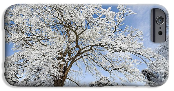 Christmas iPhone Cases - Snow Covered Winter Oak Tree iPhone Case by Tim Gainey