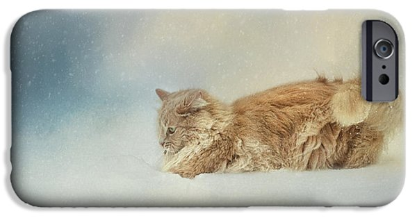 Orange Tabby iPhone Cases - Snow Diving iPhone Case by Jai Johnson